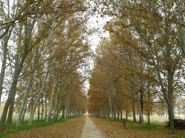 Aranjuez. Noviembre 2012